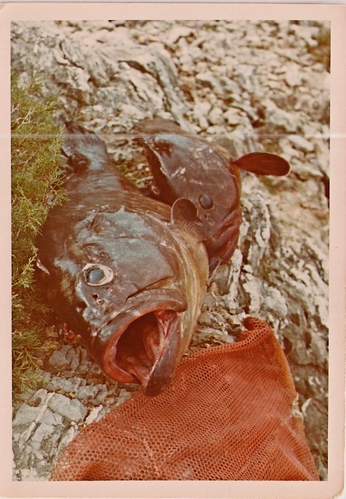 Ψαρόσουπα με βλάχο